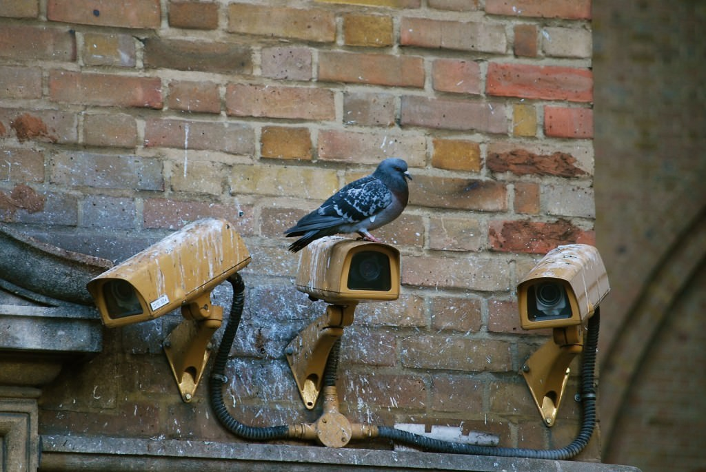 Maintain Outdoor Security Cameras